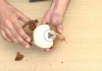 روشی راحت برای کندن پوست نارگیل