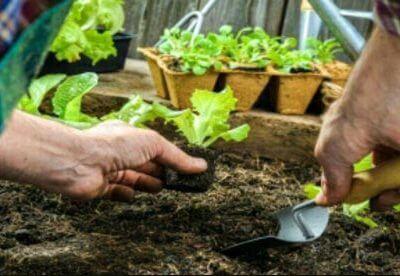 آموزش سبزی کاری در منزل