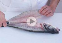 چگونه ماهی را فیله کنیم؟