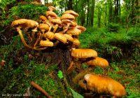 روشهای تشخیص قارچ خوراکی و سمی
