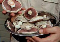 نحوه تشخیص قارچ سمی از قارچ غیر سمی