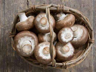 ۵ روش برای تشخیص درست قارچ خوراکی و غیرخوراکی