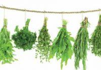 خواص انواع سبزی خوردن