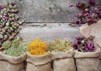گیاهان دارویی مفید برای اعصاب