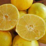 چرا لیمو شیرین تلخ میشود؟