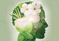 ۱۱ نسخه گیاهی برای مغز
