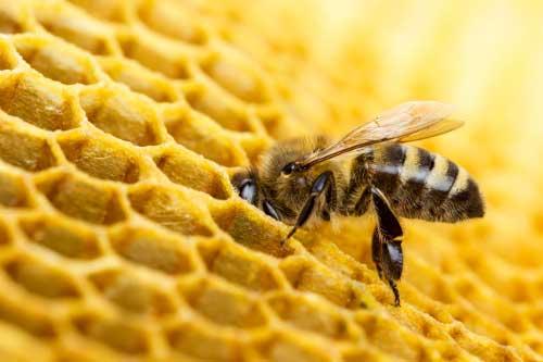 خواص شگفت انگیز بره موم زنبور عسل